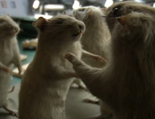 Rats Plague Paris | Focus on Europe
